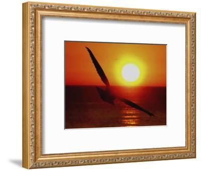 Bird Gliding into Setting Sun-Rich LaPenna-Framed Giclee Print