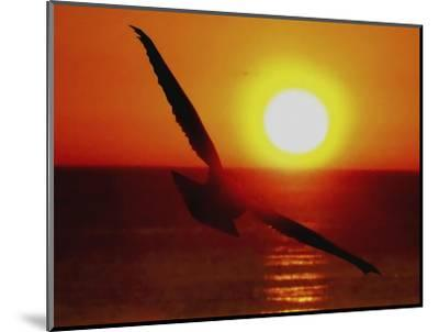 Bird Gliding into Setting Sun-Rich LaPenna-Mounted Giclee Print