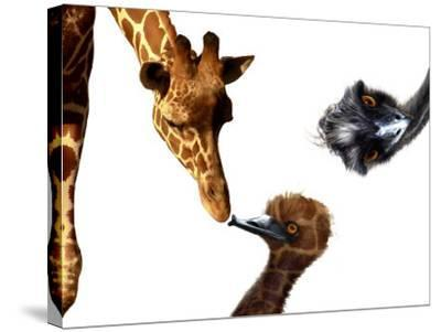 Giraffe, Emu and Offspring-Abdul Kadir Audah-Stretched Canvas Print