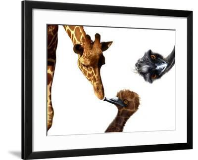 Giraffe, Emu and Offspring-Abdul Kadir Audah-Framed Photographic Print
