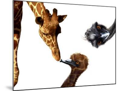 Giraffe, Emu and Offspring-Abdul Kadir Audah-Mounted Photographic Print