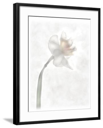 Still Life of a Flower-Joyce Tenneson-Framed Photographic Print