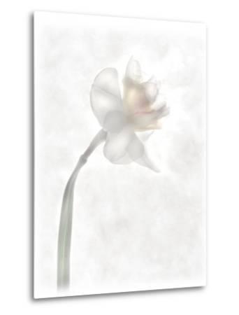 Still Life of a Flower-Joyce Tenneson-Metal Print