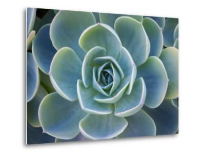 Close-Up of a Succulent Plant-Diane Miller-Metal Print