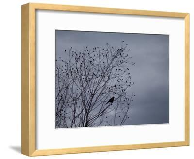 Silhouette of a Bird in a Tree Against a Cloudy Sky-Joel Sartore-Framed Photographic Print