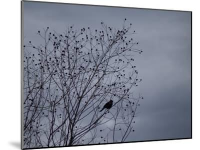 Silhouette of a Bird in a Tree Against a Cloudy Sky-Joel Sartore-Mounted Photographic Print