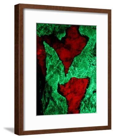 Willemite, Green, and Calcite, Red, Seen under Untraviolet Light-John Cancalosi-Framed Photographic Print