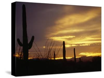 Dusk Descends over Cacti in the Arizona Desert-xPacifica-Stretched Canvas Print