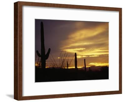 Dusk Descends over Cacti in the Arizona Desert-xPacifica-Framed Photographic Print