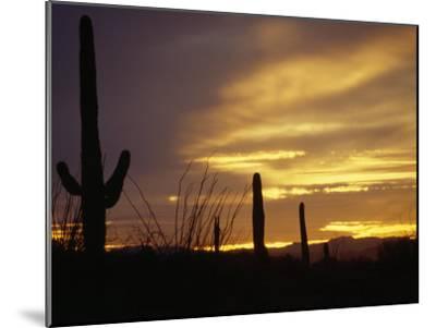 Dusk Descends over Cacti in the Arizona Desert-xPacifica-Mounted Photographic Print