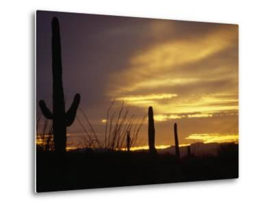 Dusk Descends over Cacti in the Arizona Desert-xPacifica-Metal Print