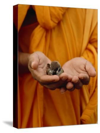 Buddhist Monk in a Saffron Robe Holding a Baby Bird in His Hands-xPacifica-Stretched Canvas Print