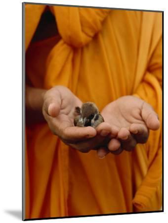 Buddhist Monk in a Saffron Robe Holding a Baby Bird in His Hands-xPacifica-Mounted Photographic Print