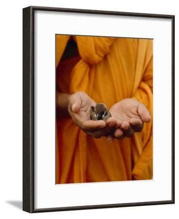Buddhist Monk in a Saffron Robe Holding a Baby Bird in His Hands-xPacifica-Framed Photographic Print