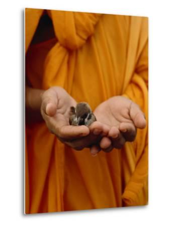 Buddhist Monk in a Saffron Robe Holding a Baby Bird in His Hands-xPacifica-Metal Print