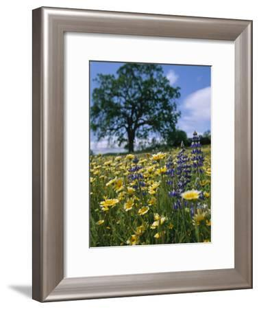 Spring Wildflowers in a Field-Marc Moritsch-Framed Photographic Print