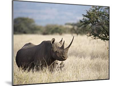 Endangered Species Black Rhino and Calf in Kenya-Mark C. Ross-Mounted Photographic Print