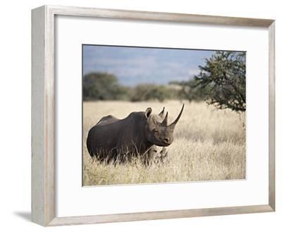 Endangered Species Black Rhino and Calf in Kenya-Mark C. Ross-Framed Photographic Print