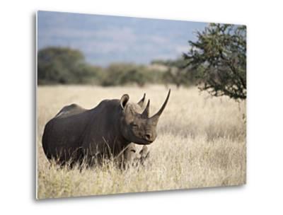 Endangered Species Black Rhino and Calf in Kenya-Mark C. Ross-Metal Print