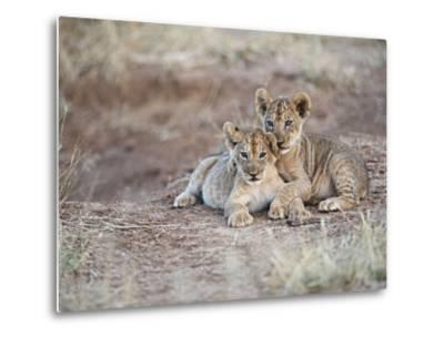 Two African Lion Cubs, Arm in Arm, as They Play in Kenya-Mark C. Ross-Metal Print