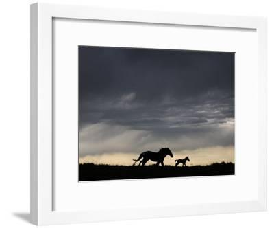 Wild Horse and Foal Running Free in a Mustang and Burro Sanctuary-Melissa Farlow-Framed Premium Photographic Print