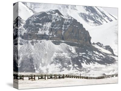 Alaska Pipeline, Alaska-Michael S^ Quinton-Stretched Canvas Print