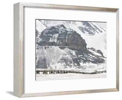 Alaska Pipeline, Alaska-Michael S^ Quinton-Framed Photographic Print