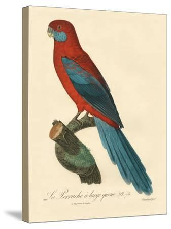 Barraband Parrot No. 78-Jacques Barraband-Stretched Canvas Print