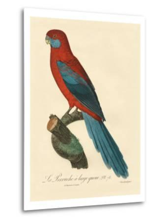 Barraband Parrot No. 78-Jacques Barraband-Metal Print