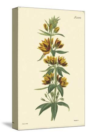 Yellow Curtis Botanical IV--Stretched Canvas Print