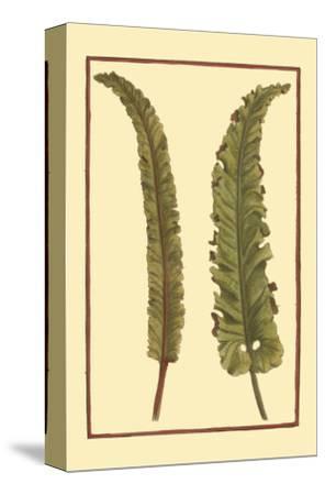 Vintage Leaf I--Stretched Canvas Print