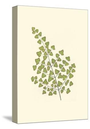 Woodland Ferns II-Edward Lowe-Stretched Canvas Print