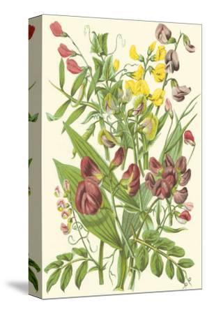 Summer Garden IX-Anne Pratt-Stretched Canvas Print