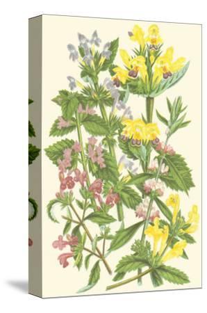 Summer Garden XI-Anne Pratt-Stretched Canvas Print