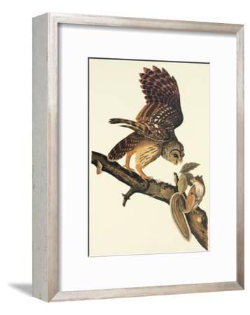 Barred Owl-John James Audubon-Framed Art Print