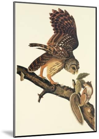 Barred Owl-John James Audubon-Mounted Art Print