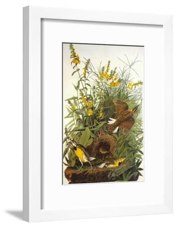 Meadow Lark-John James Audubon-Framed Art Print