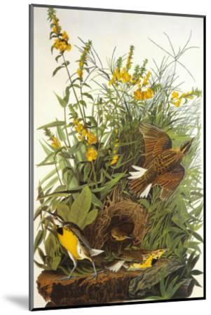 Meadow Lark-John James Audubon-Mounted Art Print