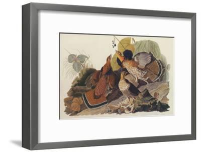Ruffed Grouse-John James Audubon-Framed Art Print