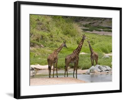 Masai Giraffe (Giraffa Camelopardalis), Masai Mara National Reserve, Kenya, East Africa, Africa-Sergio Pitamitz-Framed Photographic Print