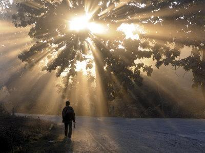 Man Walking Along a Street with Sun Rays Shining Through a Tree, Highlands, Myanmar-Michael Runkel-Framed Photographic Print