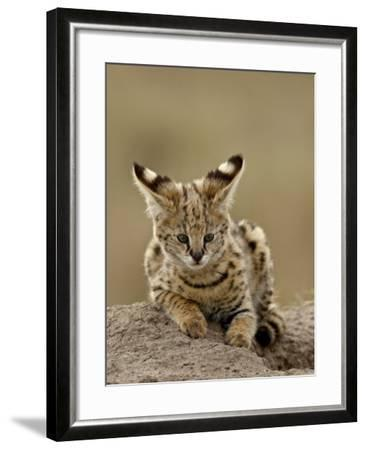 Serval (Felis Serval) Cub on Termite Mound, Masai Mara National Reserve, Kenya, East Africa-James Hager-Framed Photographic Print