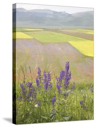 Highland of Castelluccio Di Norcia, Norcia, Umbria, Italy, Europe-Angelo Cavalli-Stretched Canvas Print