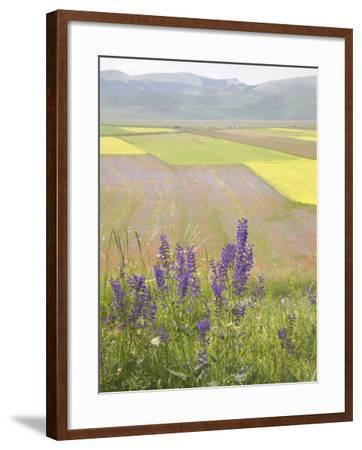 Highland of Castelluccio Di Norcia, Norcia, Umbria, Italy, Europe-Angelo Cavalli-Framed Photographic Print