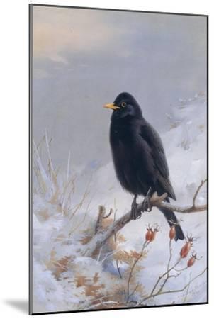 In Winter's Grasp - Blackbird, 1921-Archibald Thorburn-Mounted Giclee Print