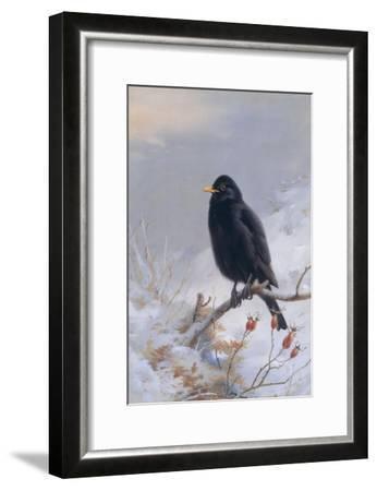 In Winter's Grasp - Blackbird, 1921-Archibald Thorburn-Framed Giclee Print