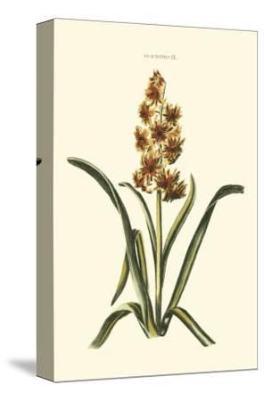 Antique Hyacinth IX-Christoph Jacob Trew-Stretched Canvas Print
