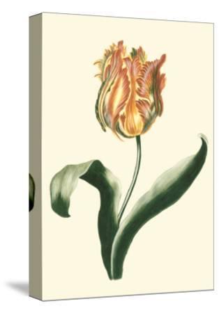 Tulipa II--Stretched Canvas Print