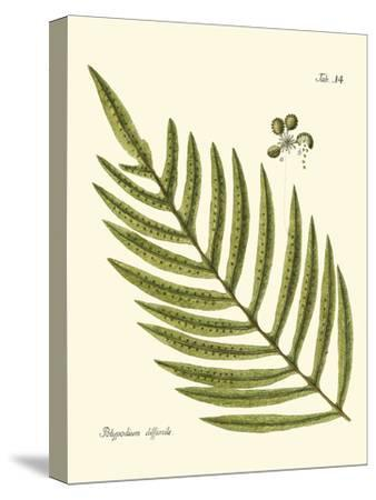 Small Antique Fern I--Stretched Canvas Print