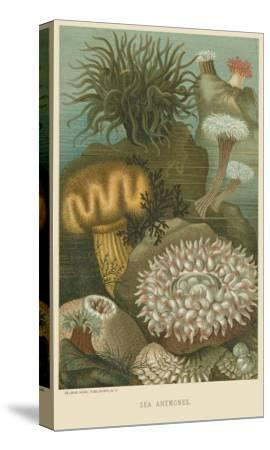 Sea Anemones--Stretched Canvas Print